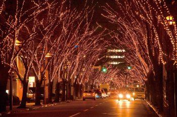 今年で30回目!けやき並木が光のトンネルに変身!