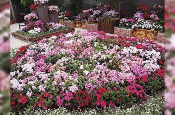 豪華な花に囲まれて、一足早い春を体感してみてはいかが