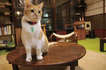 県内初の譲渡型猫カフェで、猫との触れ合いを楽しんで