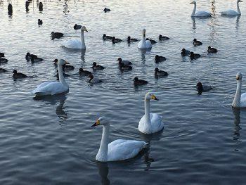 400羽を超える野鳥がやってきます
