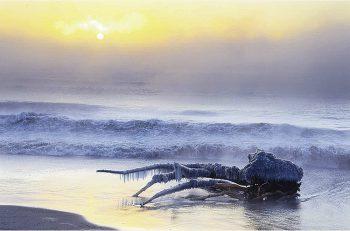 日本の自然と情景をとらえた作品が並ぶ