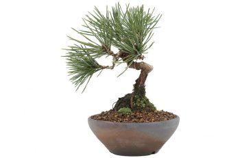「盆栽=地味」はもう古い。洒落たミニ盆栽は今、若者の間でアツいです。