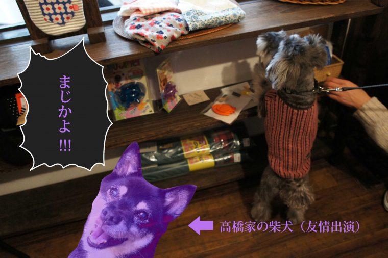 我が家の柴犬もこのように言っております。好きになってもらえるように念を送っときますね!!!!!