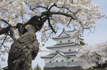 【新発田市】新発田城の桜を見に行こう!