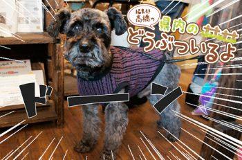 【第1回】人情横丁のペットグッズ専門店の看板犬に会ってきたよ