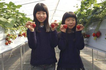 春休みはイチゴ狩りに行こう! 新潟県内イチゴ狩りスポット9選