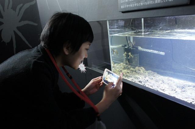 「カエルかわいい~♥」(高崎)※撮影はOKですが相手は生き物なのでフラッシュ厳禁です!