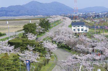 春だ!桜だ!県内のおすすめお花見スポットその1