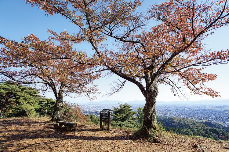 標高約180メートルにある本丸跡からは、日本海や頸城平野、それを取り巻く山並みを一望できる