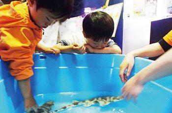 寺泊水族博物館の大人気イベント。サメに触れる貴重なチャンス!