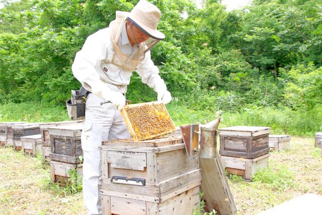 採蜜場所は、新潟市北区太夫浜や新発田市藤塚浜など。ご覧のような作業から天然のハチミツが取れるんです!
