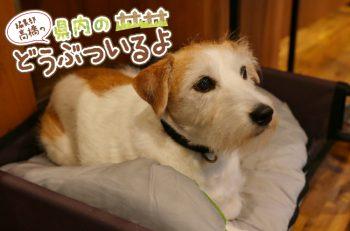 【第2回】胎内のオシャレカフェの看板犬に会ってきたよ