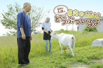 【第3回】仲良し夫婦が営むラーメン屋さんのヤギに会ってきたよ!そのほかにも…