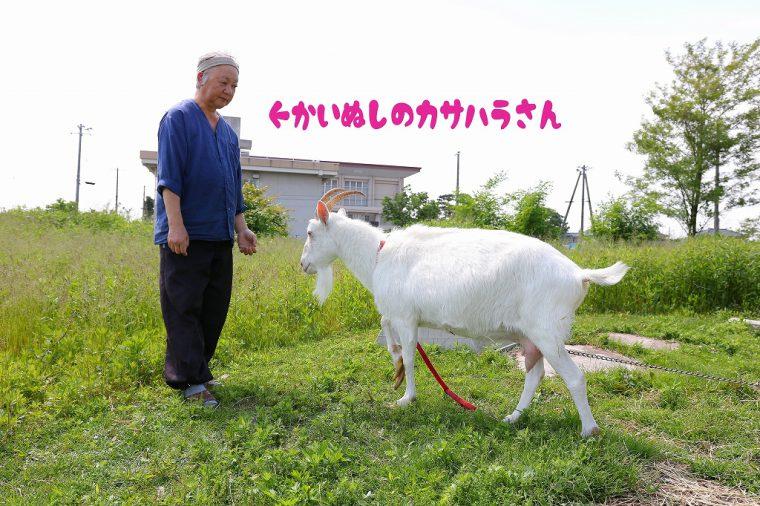 アルプスの少女ハ〇ジに出てくるような真っ白なヤギさんでした。(※写真のような距離で近づくのは、飼い主だからなせる業です。はじめての人は危険なので遠くから見つめましょう※)