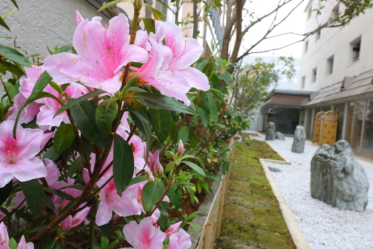 取材時には、庭園にツツジが咲き始めていました。