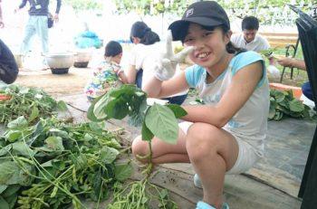 家族で楽しめる枝豆イベント。収穫したての枝豆を食べられます!