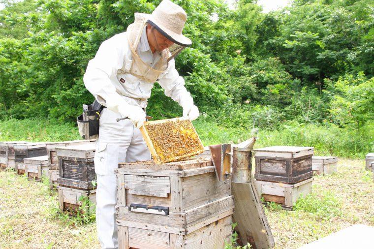 新発田市藤塚浜近くで採蜜作業をする近藤さん。下は女王バチを指差している写真。分かりますかね?