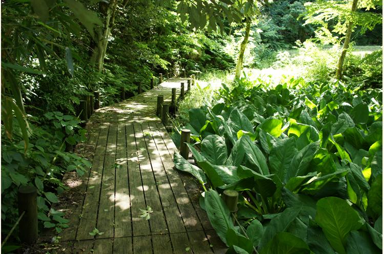 湿地に遊歩道が作られていたり