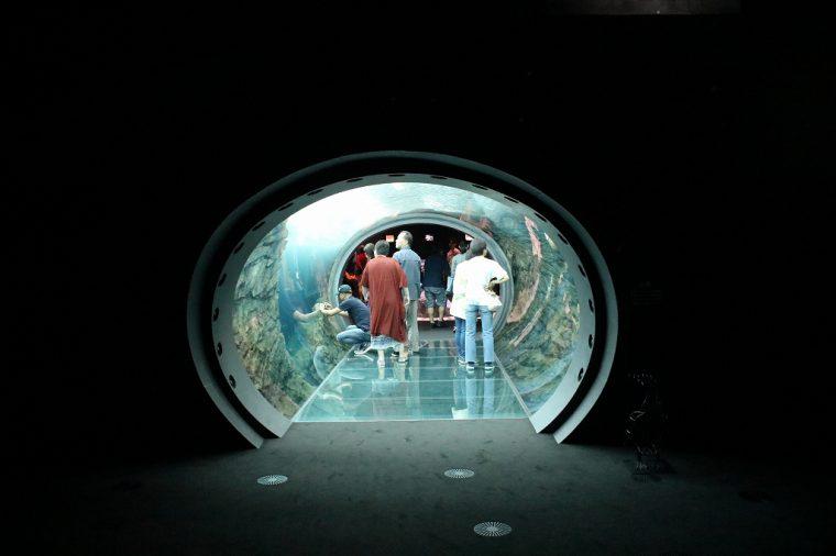上から下まですべて水槽になったトンネル。海の中に入った気分になれます!