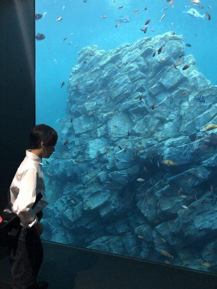 50種38,000点の生き物が混泳しています~