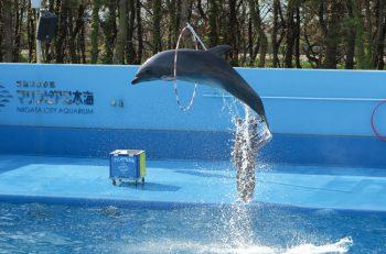 夏のおでかけにピッタリ! イルカショーが楽しい「マリンピア日本海」へ遊びに行こう♪