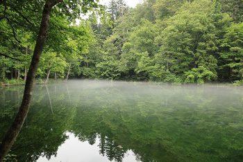 【津南町】沼の水が1日ですべて入れ替わる!?