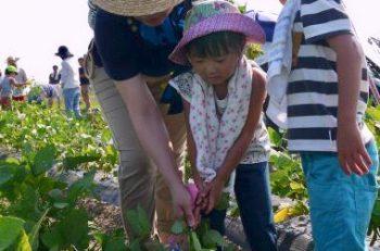 【弥彦村】採れたて、茹でたての枝豆が食べられる!