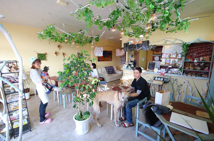 緑やインテリアが、にぎやかに店内を彩る。ワンちゃんものびのびと過ごせるゆとりある空間がうれしい