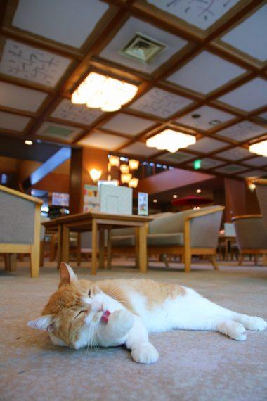 ミーちゃんを見ていると、旅館の居心地のよさが伝わってきます!