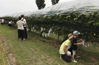 【南魚沼市】ワイナリーの収穫祭に行こう!