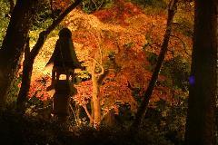 灯籠、太鼓橋、東屋、池などを配した情緒あふれる日本庭園