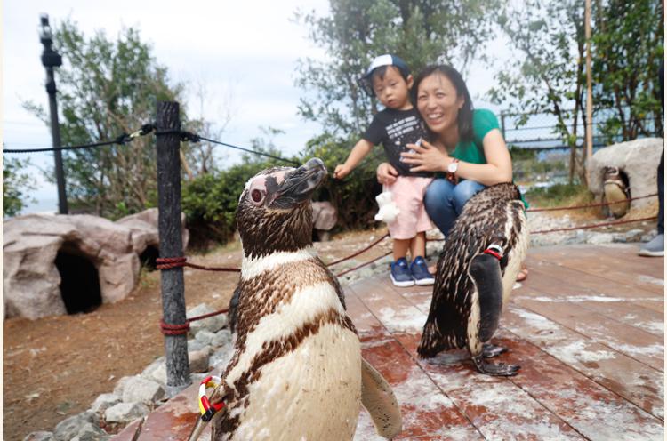 愛らしさ満点のペンギンを近くで観察してみて。カメラにもこんなに近づいて、とっても人なつっこい子ばかりです