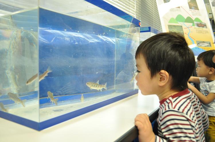水槽展示。間近で魚が泳いでる姿を見ることができるよ!