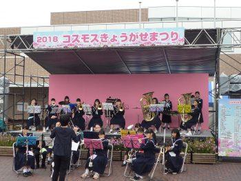 【阿賀野市】コスモスの咲くころにイベントいっぱい。フリーマーケットも