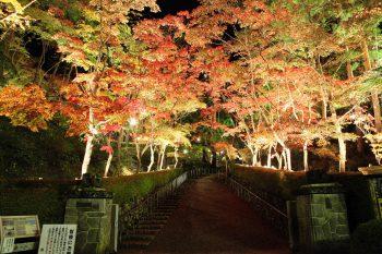 【柏崎市】深紅に包まれる風光明媚な日本庭園を期間限定ライトアップ!