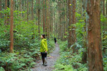森を歩いて、地元グルメ、温泉も! 五頭温泉郷の体験型ウォーキングイベント