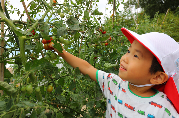 トマト、かぼちゃ、大豆、なすなどさまざまな野菜を苗から育てます