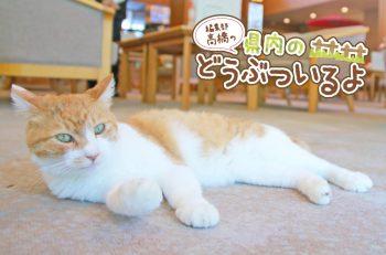 【県内のどうぶついるよ第4回】岩室温泉街の老舗旅館にいる看板猫に会ってきたよ