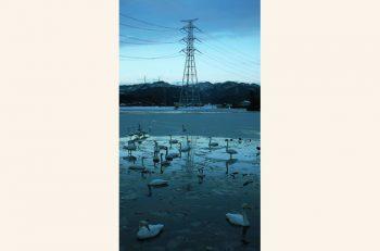 「水と土の芸術祭」参加作家たちの「新潟」へのまなざし