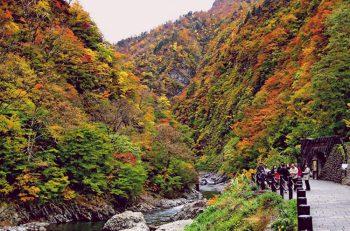 【十日町市】紅葉の清津峡に行こう