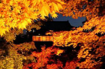 旧齋藤家別邸の庭園がライトアップ! 茶席では限定チョコレート和菓子も味わえる!