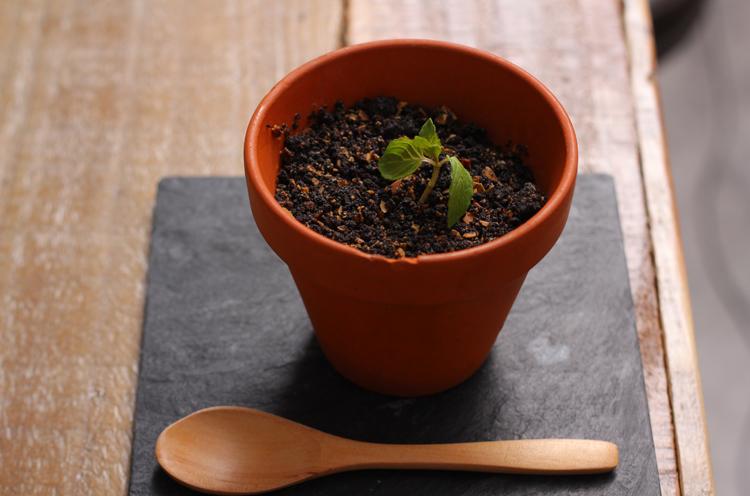 この植木鉢、、 一体ナニ!?