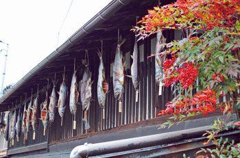 【村上市】冬の風物詩「越後村上鮭塩引き街道」を見に行こう!