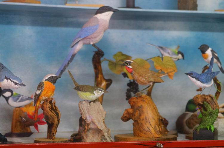 店内に木工の鳥たちが。実は店主の小林正隆さんが作ったもの。器用ですね~
