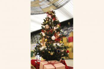 12月の新潟県立自然科学館はクリスマスイベントが満載です!