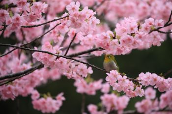 日本の美しい自然を撮り続けている写真家・米美知子の写真展|ビュー福島潟