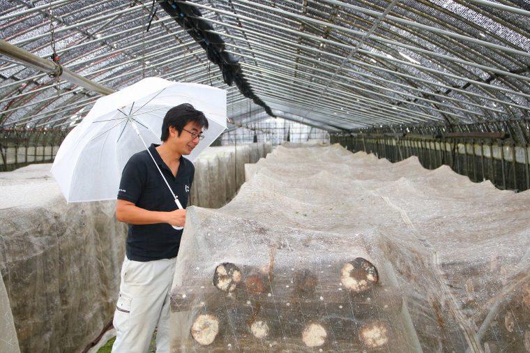 シイタケを生産する第四生産組合の代表、竹野さん