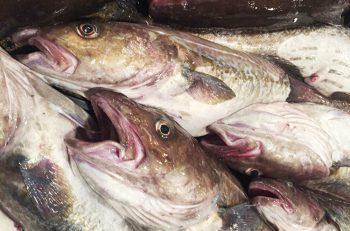 【粟島浦村】おいしい真鱈を食べに粟島へ行こう!