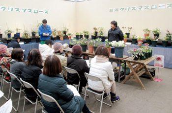 【新潟市】冬の花として人気の高いクリスマスローズの展示会を秋葉区各所で開催!