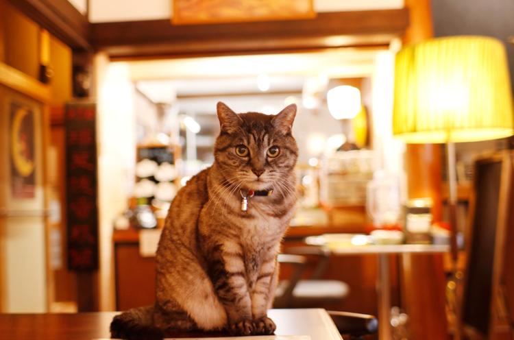 看板猫のリッキーくん。気まぐれに店番しています